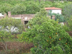 Orange trees everywhere - a farmhouse near the town of Silves.