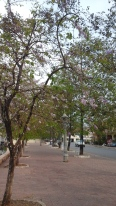 Riverside boulevard #4