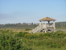 Bird lookout tower