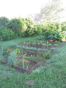 My vegetable garden.