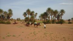The camels for our trek