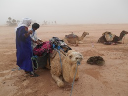 Trying to load up the camels