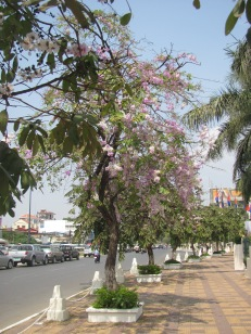 Pretty street scene in Phnom Penh