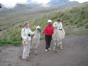 meeting some llamas on the way.
