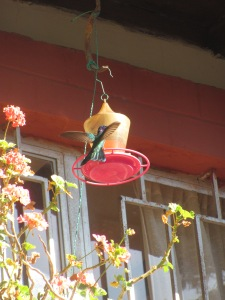 Huge hummingbirds were everywhere in our garden.