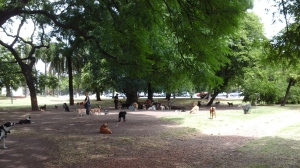 Dogs with their sitters hanging out in a local park.