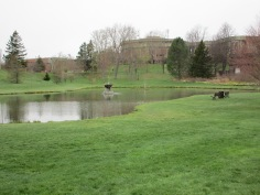 Mt.A's pond and focal point of the campus.