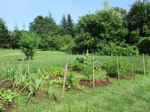 Veggie garden.