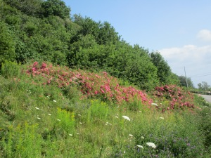 A profusion of flowers along the road.
