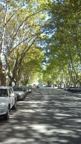 A sycamore lined street.