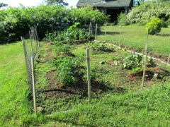 The beginning of a vegetable garden in Victoria Beach.