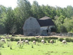 A sheep farm in Annapolis Co.
