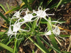 Common plant in CM