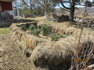 A bed for wintering vegetables.