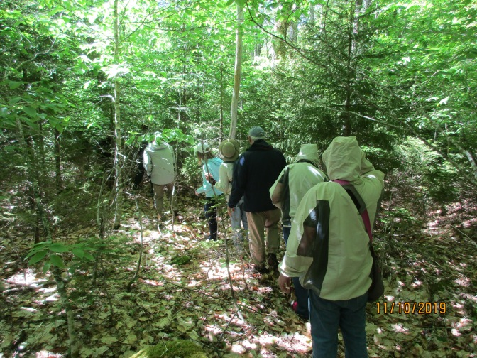 Extinction Rebellion foresters learning about an old growth forest.
